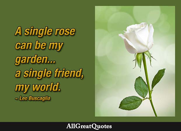 single rose can be my garden quote leo buscaglia