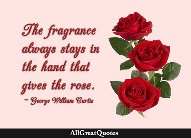 Love Quotes For Him With Roses : Rose Quotes