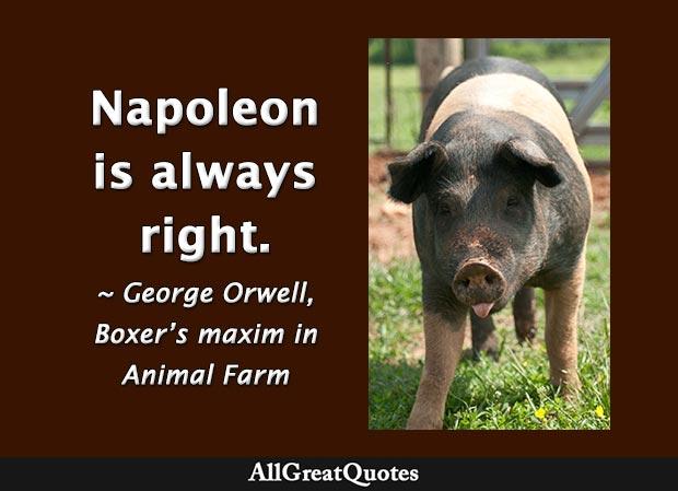Napoleon is always right - Boxer in Animal Farm