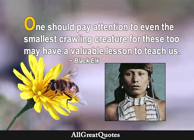 One should pay attention to even the smallest crawling creature for these too may have a valuable lesson to teach us. - Black Elk