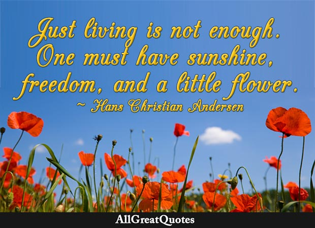 sunshine, freedom, and a little flower quote hans christian andersen