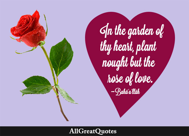 In the garden of thy heart, plant naught but the rose of love. - Bahá'u'lláh