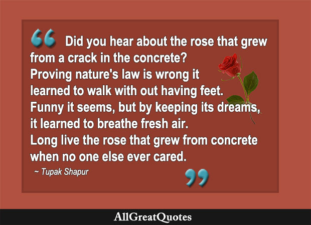 Did you hear about the rose that grewfrom a crack in the concrete? Proving nature's law is wrong it learned to walk with out having feet. - Tupac Shakur