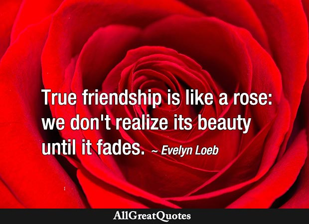 True friendship is like a rose: we don't realize its beauty until it fades - Evelyn Loeb