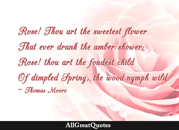Rose! Thou art the sweetest flower  That ever drank the amber shower;  Rose! thou art the fondest child  Of dimpled Spring, the wood-nymph wild - Thomas Moore